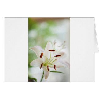 Cartão Flor do lírio branco inteiramente aberta