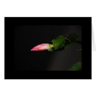 Cartão Flor do Natal do cacto da flor