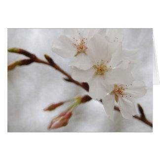 Cartão Flor do primavera