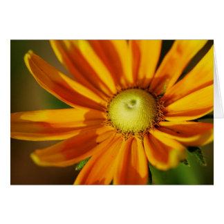 Cartão Flor do Rudbeckia