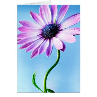 Cartão Flor floral das margaridas da flor da margarida