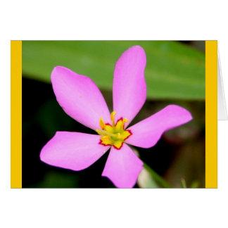 Cartão Flor Funky cor-de-rosa