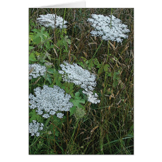Cartão Flor selvagem branca do laço da rainha Anne