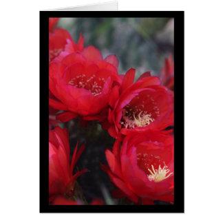 Cartão Flor vermelha do cacto