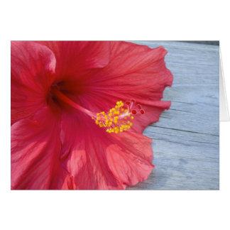 Cartão Flor vermelha do hibiscus