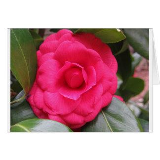 Cartão Flor vermelha do japonica Rachele Odero da camélia