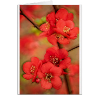 Cartão Flor vermelha do marmelo
