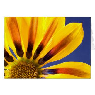Cartão Flor vibrante - Gazania ou margarida africana