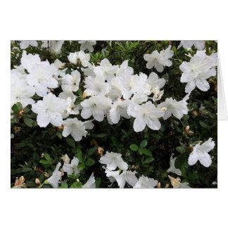 Cartão floral da azálea branca