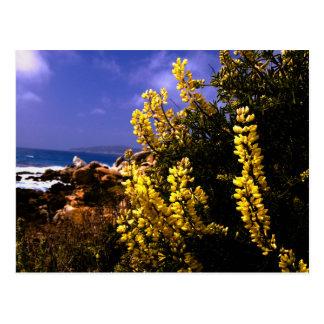 Cartão floral da costa de Califórnia