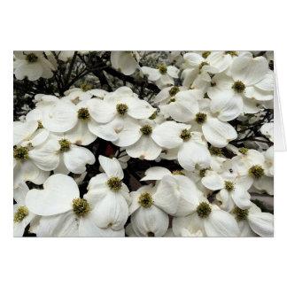 Cartão floral da flor do Dogwood