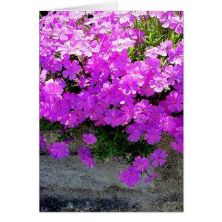 """Cartão floral vazio do """"Phlox"""" -"""