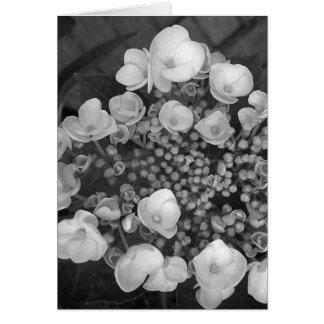 Cartão Flores B&W