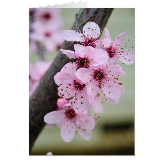 Cartão Flores cor-de-rosa bonito da flor de cerejeira