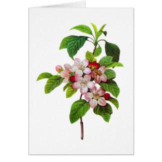 Cartão Flores cor-de-rosa de Apple por Pierre Jopseph