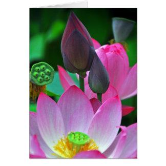 Cartão Flores cor-de-rosa de Lotus