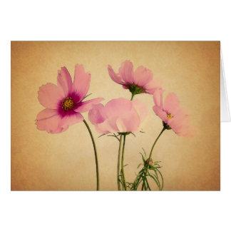 Cartão Flores cor-de-rosa do cosmos no pergaminho do