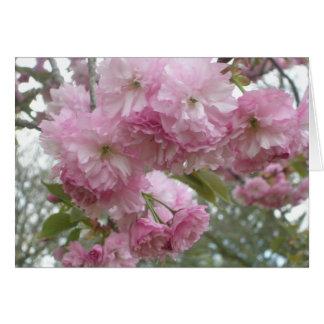 Cartão Flores Cor-de-rosa-Franjadas