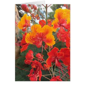 Cartão Flores da arizona
