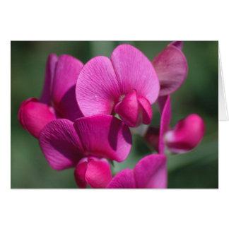 Cartão Flores da ervilha