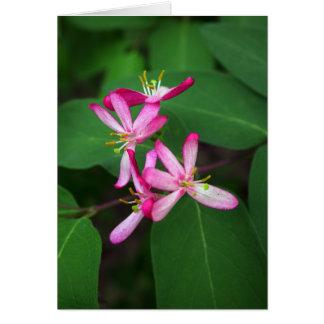 Cartão Flores da madressilva