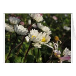 Cartão Flores da margarida branca no fundo verde