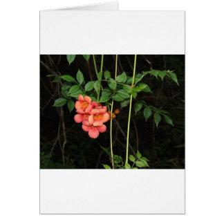 Cartão Flores da meia-noite