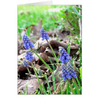 Cartão - flores da páscoa