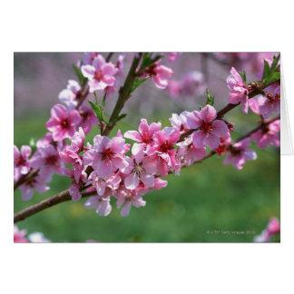 Cartão Flores de Apple
