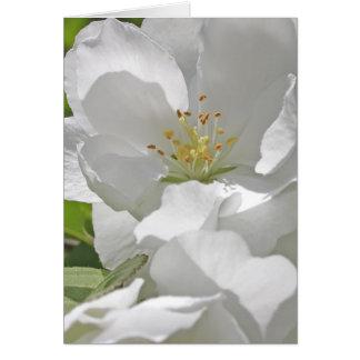 Cartão Flores de cerejeira