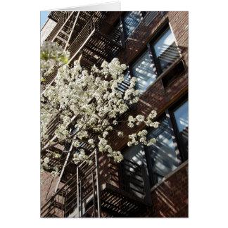 Cartão Flores de cerejeira da vila demasiado