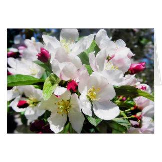 Cartão Flores de cerejeira do primavera