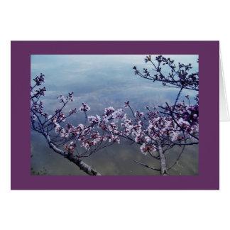 Cartão Flores de cerejeira na bacia maré, Washington DC-2