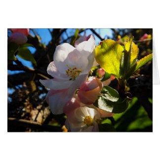 Cartão Flores de cora