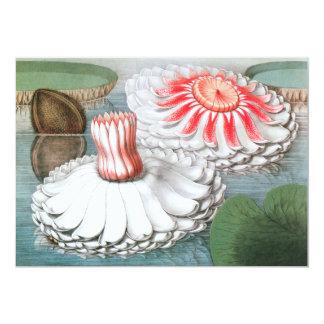 Cartão Flores de Waterlilies do vintage em uma lagoa do