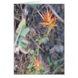 Cartão Flores desconhecidas no parque nacional de sequóia