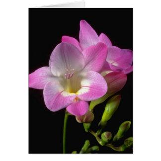 Cartão Flores do freesia do primavera