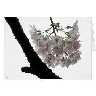Cartão Flores do primavera, Golden Gate Park