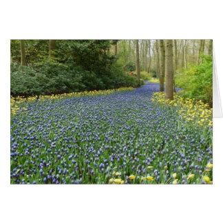 Cartão Flores do primavera - rio dos jacintos
