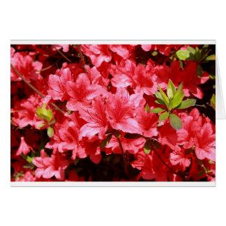 Cartão flores do vermelho da azálea