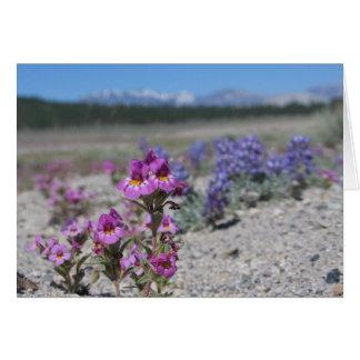 Cartão Flores e lupine desconhecidos, parque nacional de