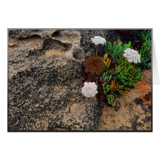Cartão Flores e rochas na costa de Portugal