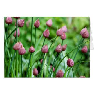 Cartão Flores em botão do cebolinho