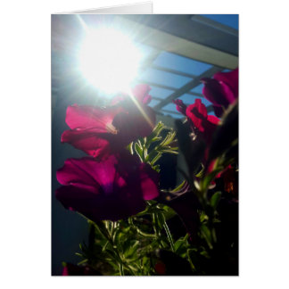Cartão Flores no sol