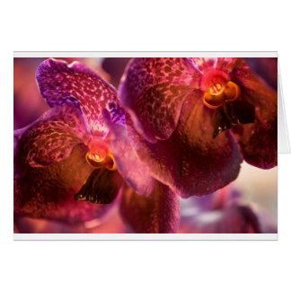 Cartão Flores puras da cera de Vanda da orquídea