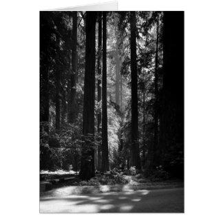 Cartão Floresta da sequóia vermelha, o Bosque do