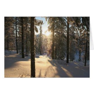 Cartão Floresta de Finnisch