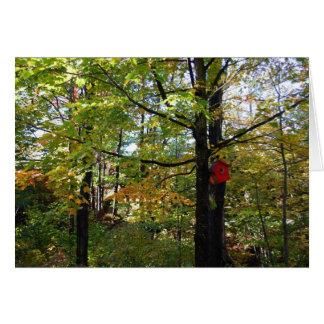 Cartão Floresta do norte do outono de Orntario
