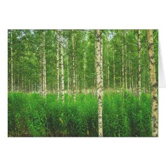 Cartão Floresta do vidoeiro