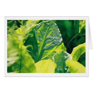 Cartão Folha verde